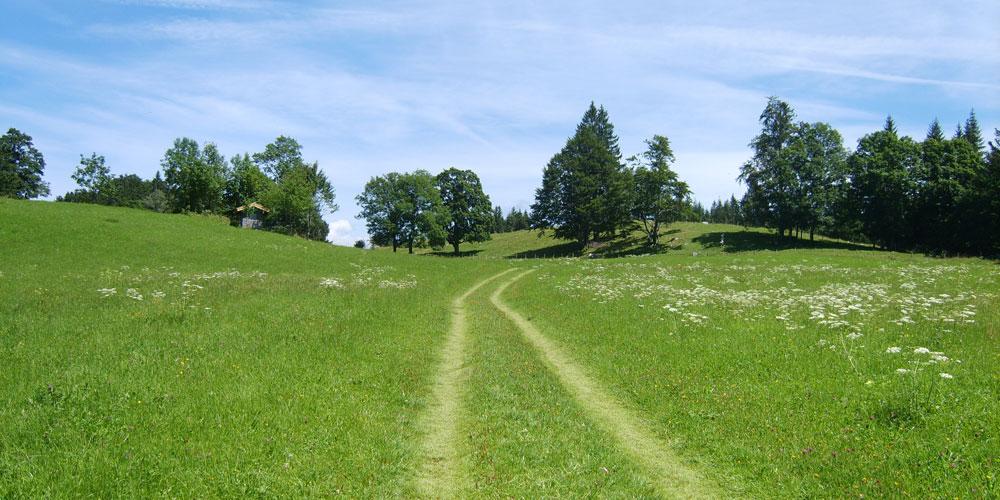 Foto eines Wanderwegs, der über eine saftig grüne Bergwiese führt
