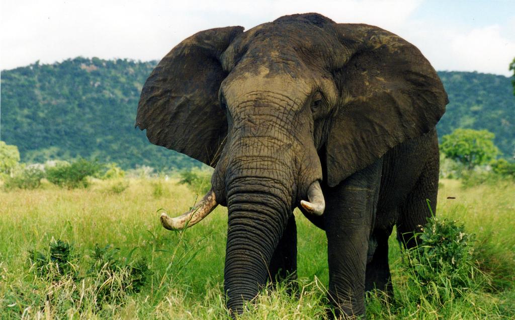 Ein Elefant auf einer grünen Wiese. Im Hintergrund sind Berge zu erkennen.