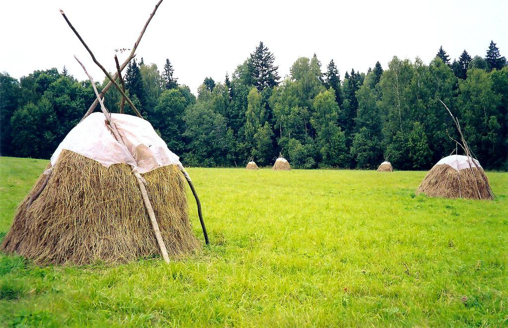 Eine große grüne Wiese mit einigen Heustapeln, die mit Stöcken und Planen zusammengehalten werden.