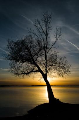 Umriss eines Baumes am Chiemsee, hinter dessen Stamm die Sonne untergeht