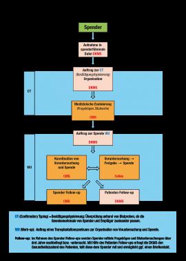 Schaubild der einzelnen Schritte von der Typisierung bis zur Stammzellenspende und die Zeit danach. © Cellex